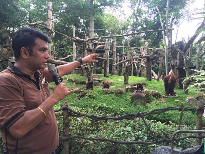 Chit-chat with Orang Utans' keeper