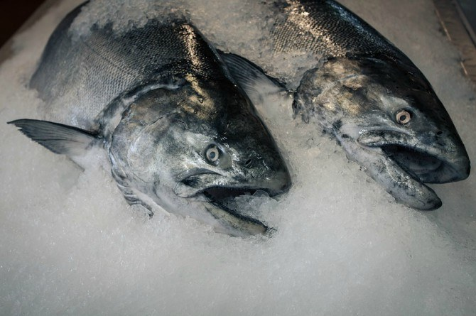 frozen fish nutrition