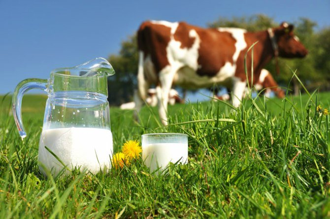milk alternative 1 Cow's milk alternatives and their pros and cons