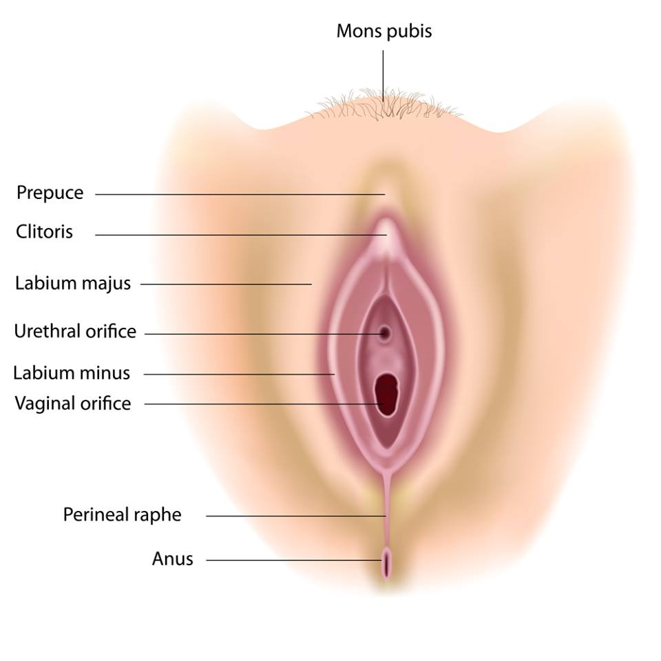 perineum Perineal massage: A guide for pregnant moms