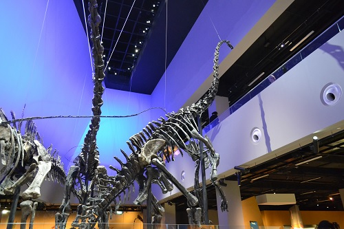 15. Check out real dinosaur skeletons!