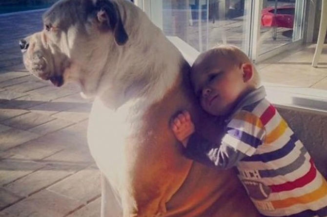 26 Photos that prove your kids need a pet