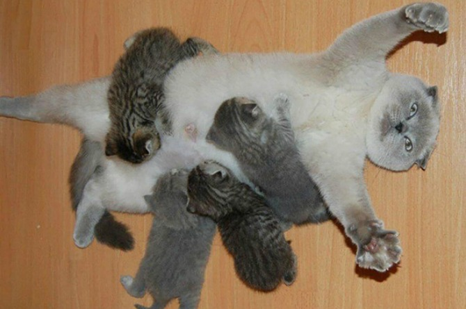 9 Hilarious pictures of pets that perfectly sum up motherhood