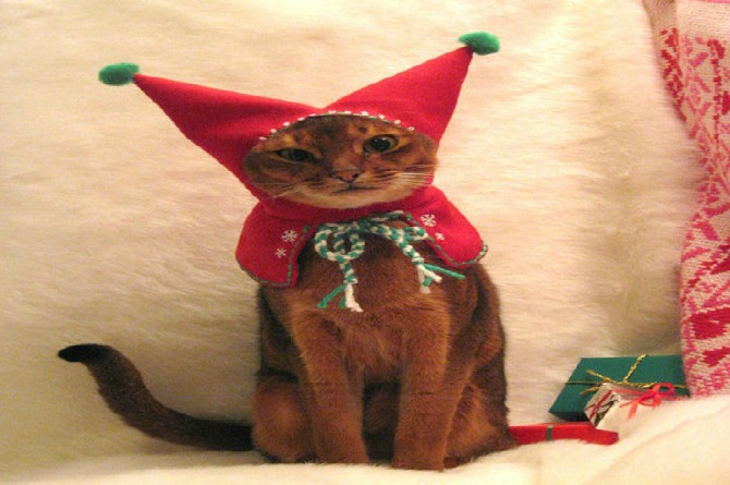 The Jester Cat - Christmas Edition