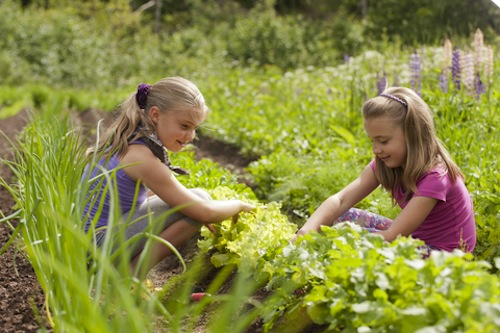 Plant a small vegetable garden together