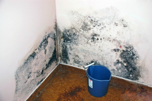 Get rid of mold naturally