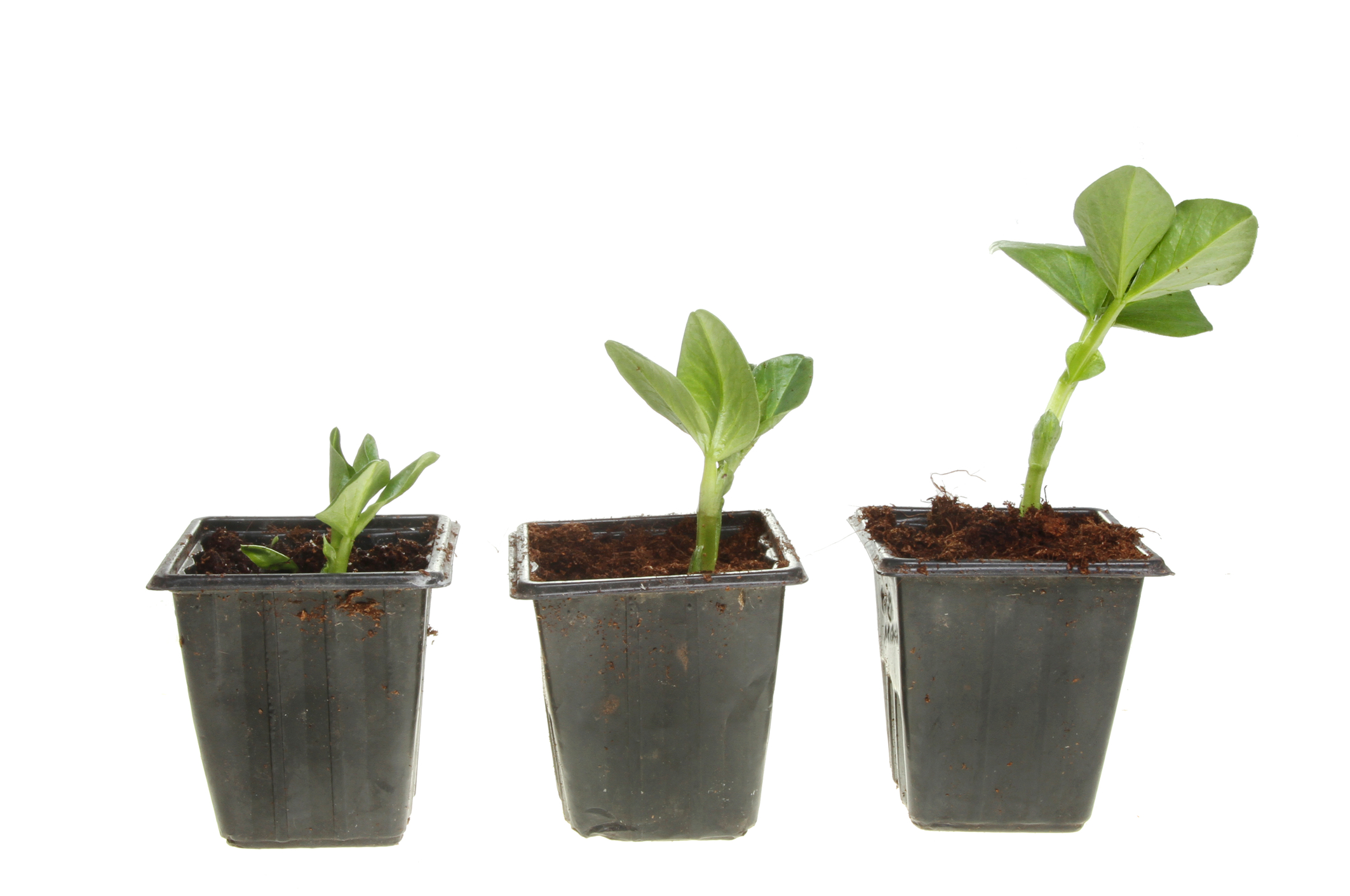 8. See how they grow