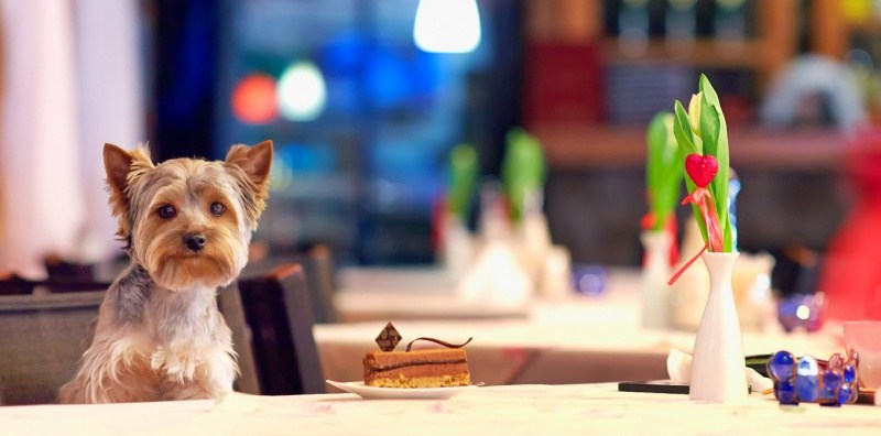 Where pets can enjoy dining out with their hoomans