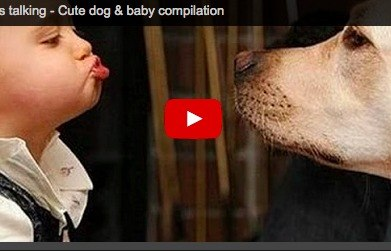 Funny baby video: The truth about babies & dogs