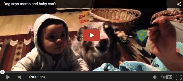 Dog says mama, but baby can't. Cuteness overload this!