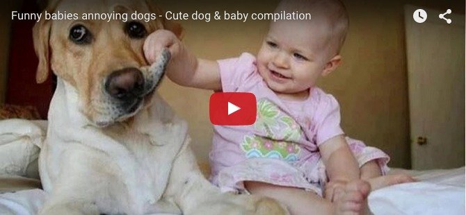 When babies annoy their pets: Perfect recipe for a cute baby video