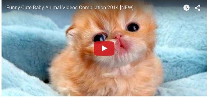 What happens when cute animal babies are caught on the camera