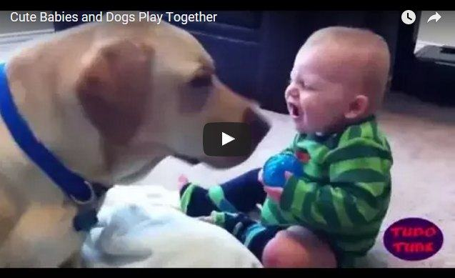 These cute babies and pets are having the time of their lives
