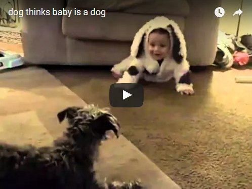 Dog thinks baby dressed like a dog is a dog