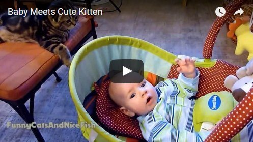 Kitten and baby have the most adorable first meeting