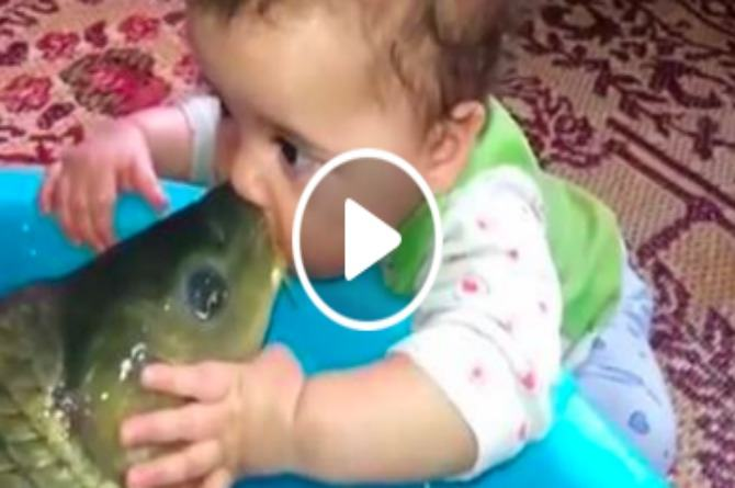 The most unusual kiss ever: A fish and a baby