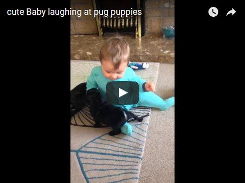 This baby plays with puppies in the most adorable way