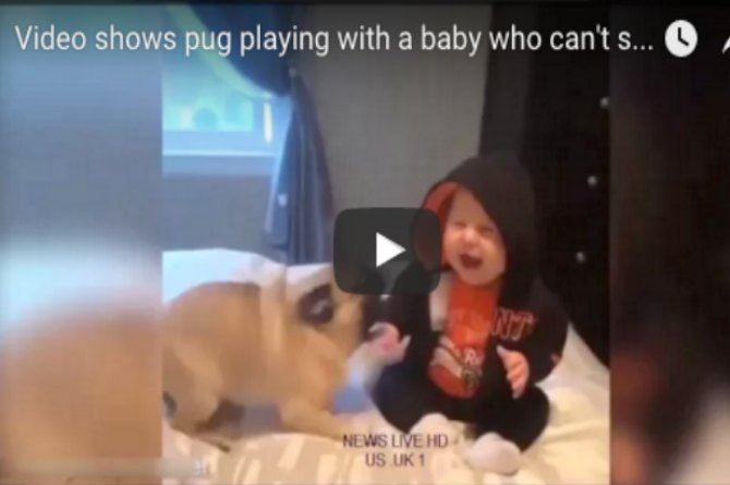 Watch! This video of a baby playing with a pug will leave you in splits