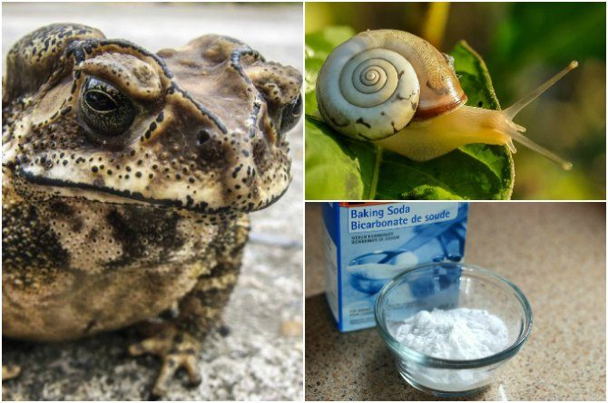 Have you heard about these 10 of the world's weirdest flu remedies?