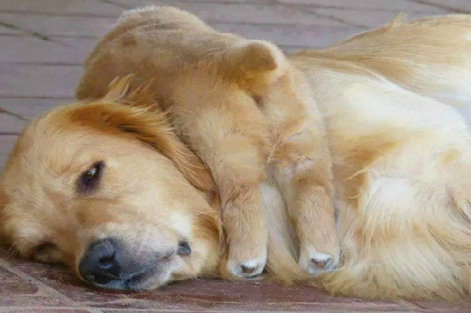 9 funny pictures of pets that perfectly sum up motherhood