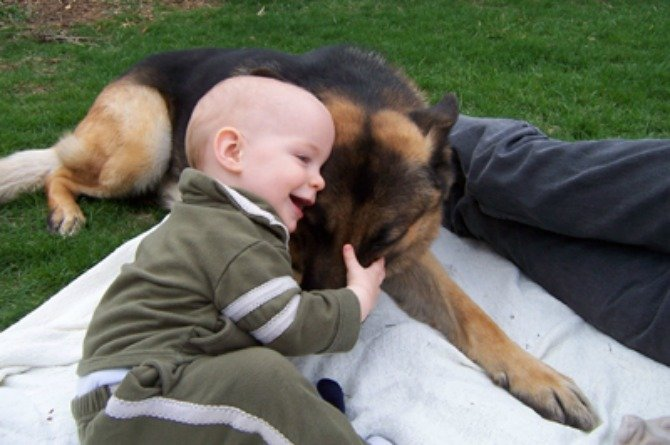The surprising reason why you shouldn't let your dog lick your child's mouth