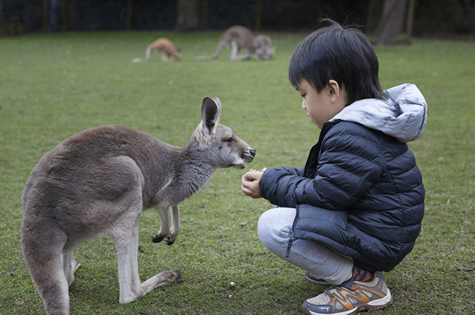 smart kangaroo 5 Unlikely travel destinations to make the world your child's classroom