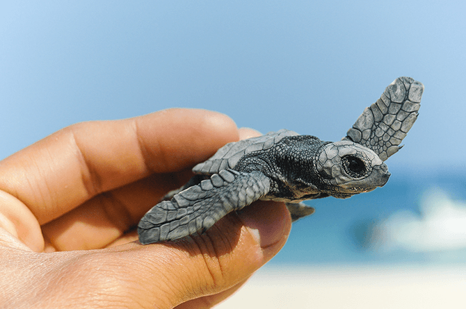turtle 4 Family friendly travel secrets of Chennai to explore with kids