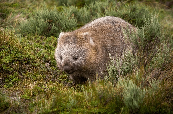 wombat 5 Unlikely travel destinations to make the world your child's classroom