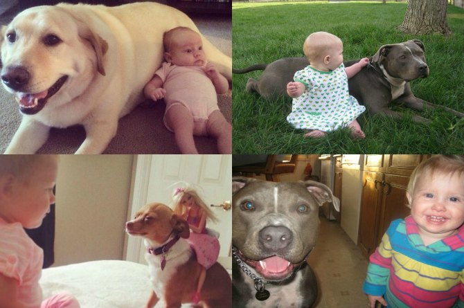 30 Ridiculously cute pictures of babies and their dogs