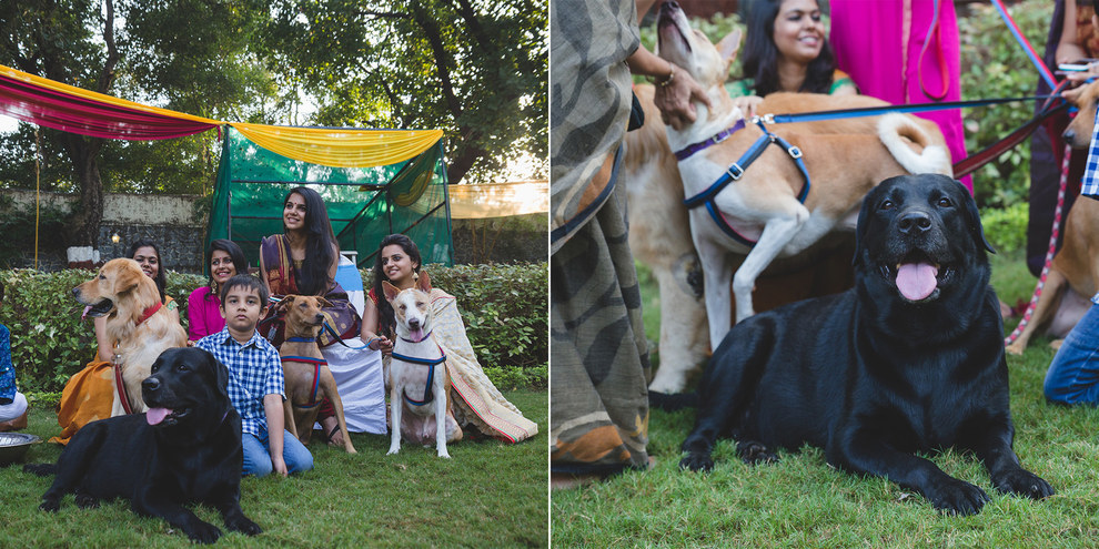 So it was no surprise when they decided to have the most animal-friendly wedding ever.